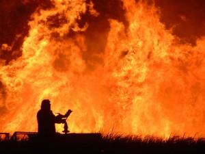 8027-incendio_bosco